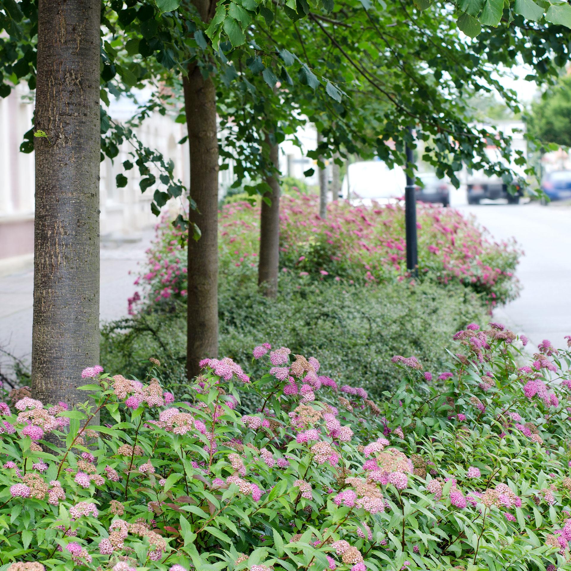 Garten Und Landschaftsbau Ausbildung Voraussetzungen: Wulf Garten- Und Landschaftsbau